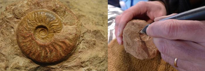 Journées du patrimoine 2018 - Atelier de dégagement de fossiles par micro-percussion