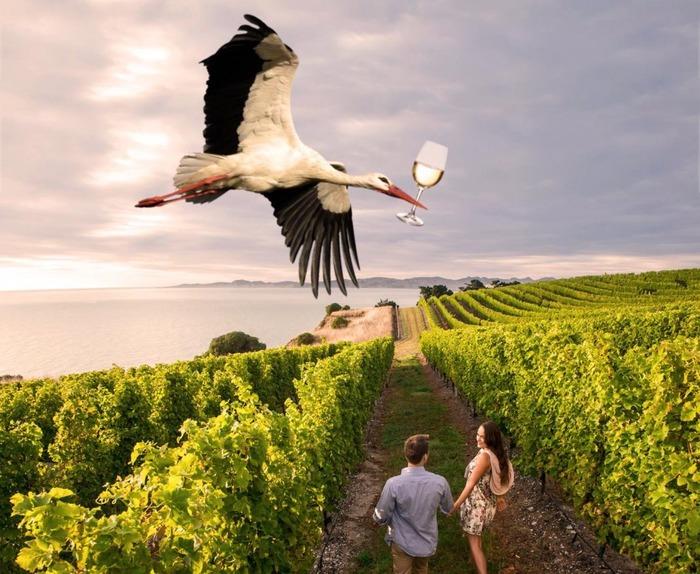 Atelier de dégustation de vins « HOP LÀ BATTLE ! (Alsace VS...) »