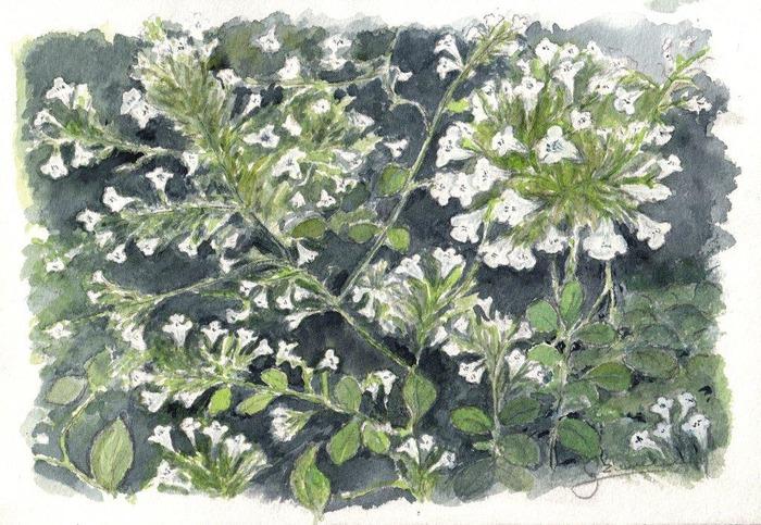 Journées du patrimoine 2018 - Atelier de fabrication de tisane à partir de plantes séchées