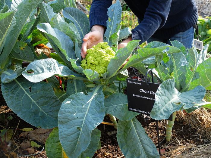 Journées du patrimoine 2017 - Atelier de jardinage