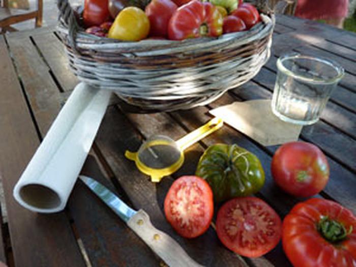 Journées du patrimoine 2018 - Atelier de récolte de graines et de réalisation de soupes froides et de coulis à partir des légumes-fruits du jardin pédagogique
