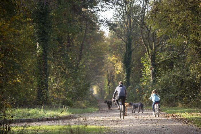 Journées du patrimoine 2018 - Balade avec l'Office National des Forêts