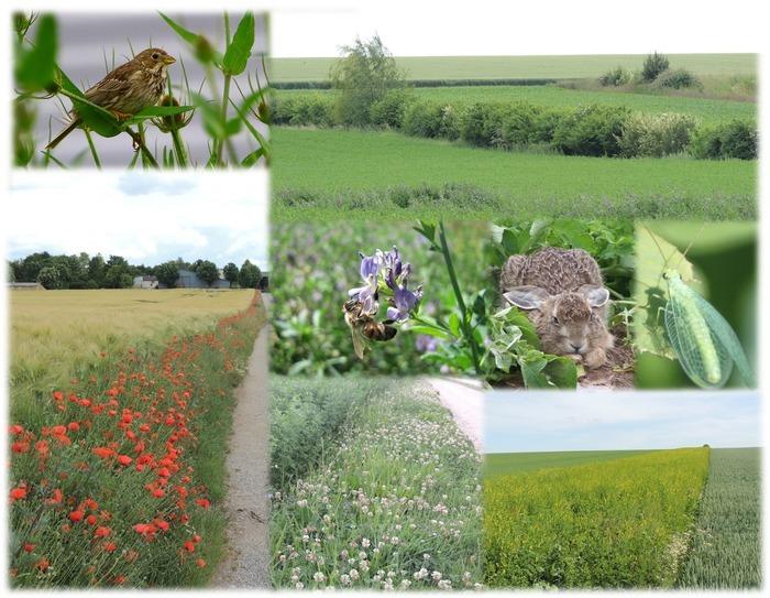 Journées du patrimoine 2018 - Balade découverte de la biodiversité et du paysage