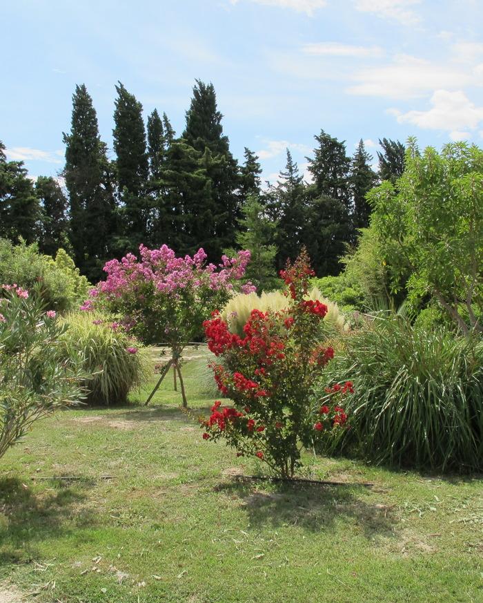 Crédits image : Bambous en Provence