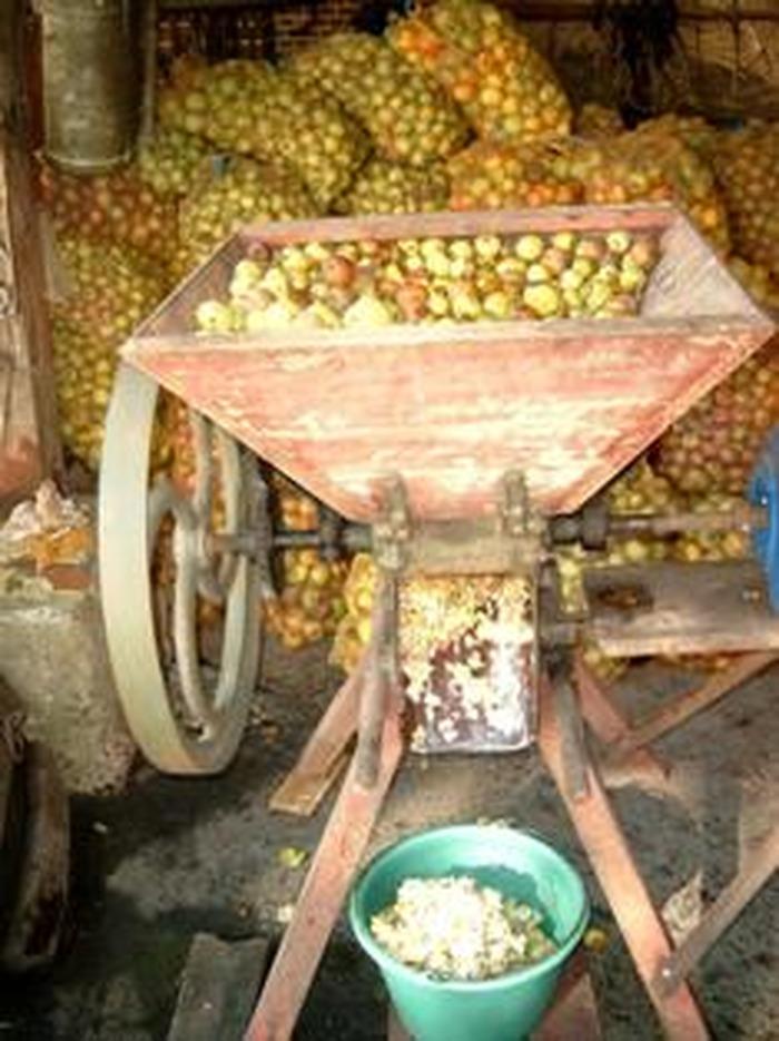 Journées du patrimoine 2018 - Démonstration de broyage de pommes à l'ancienne