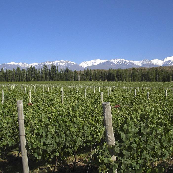 Carnets de voyage : l'Argentine viticole