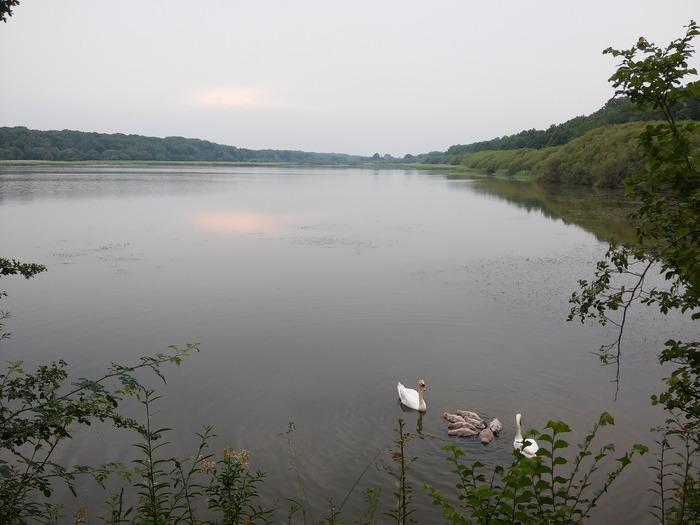 Journées du patrimoine 2018 - Circuit commenté du Parc Naturel Régional de la Haute Vallée de Chevreuse autour des étangs de Hollande.