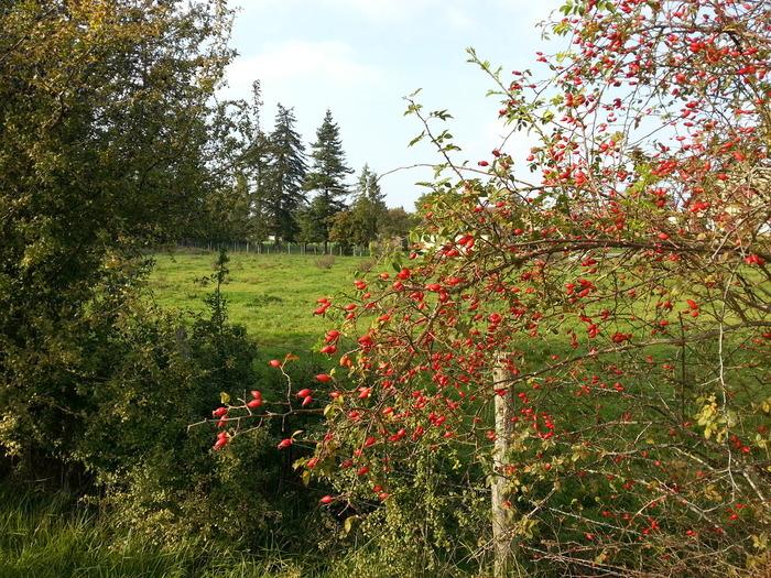 Journées du patrimoine 2018 - Circuit découverte du patrimoine - La Boucle d'Ouville