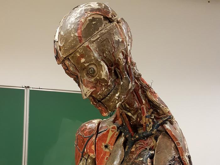 Journées du patrimoine 2018 - Collection Auzoux - L'anatomie de papier
