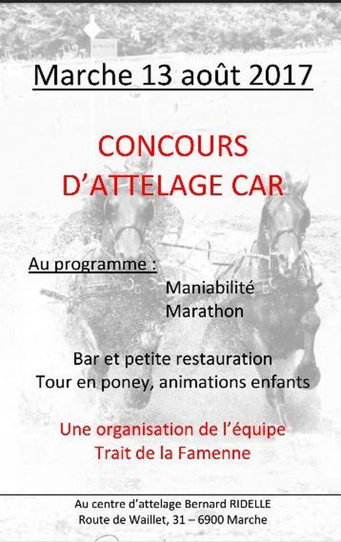 Concours d'Attelage, à Marche-en-Famenne (B)