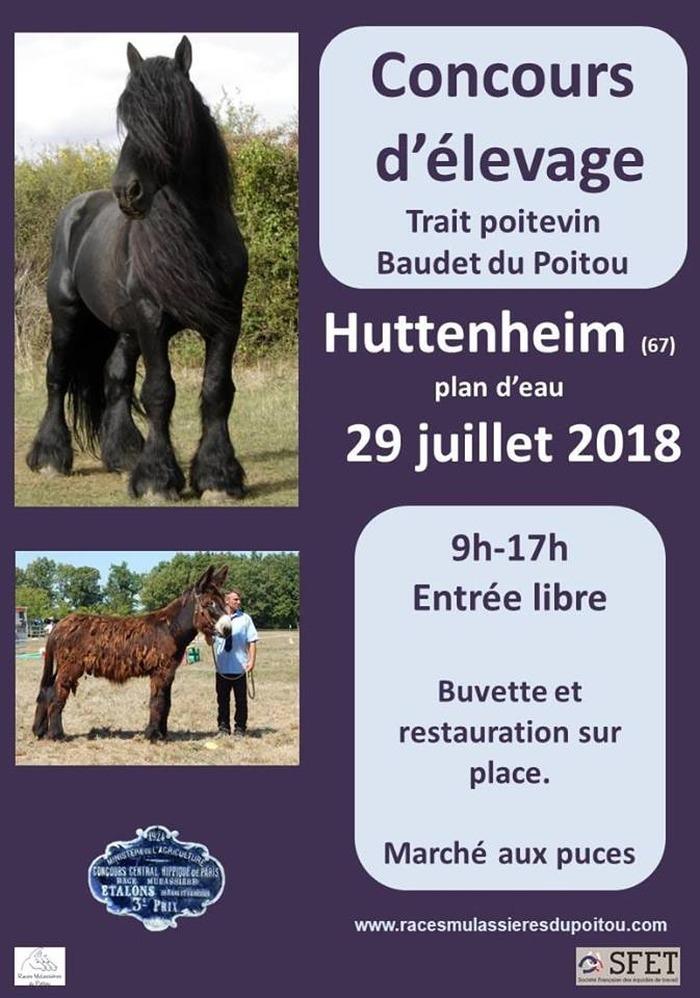 Concours d'Elevage Modèle et Allures, à Huttenheim (67)