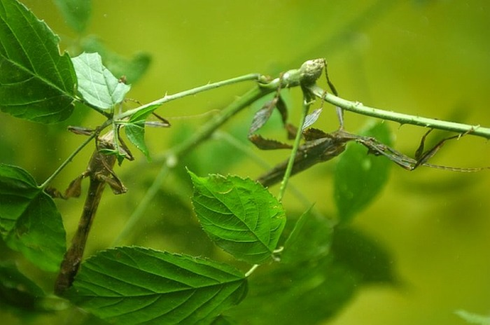 Conférence : que faire dans son jardin pour favoriser la biodiversité ?