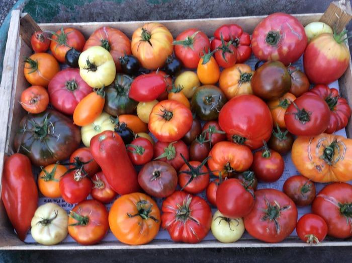 Journées du patrimoine 2018 - Atelier autour de la tomate
