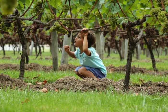 Journées du patrimoine 2018 - Visitez la vigne du Coteau du Braden
