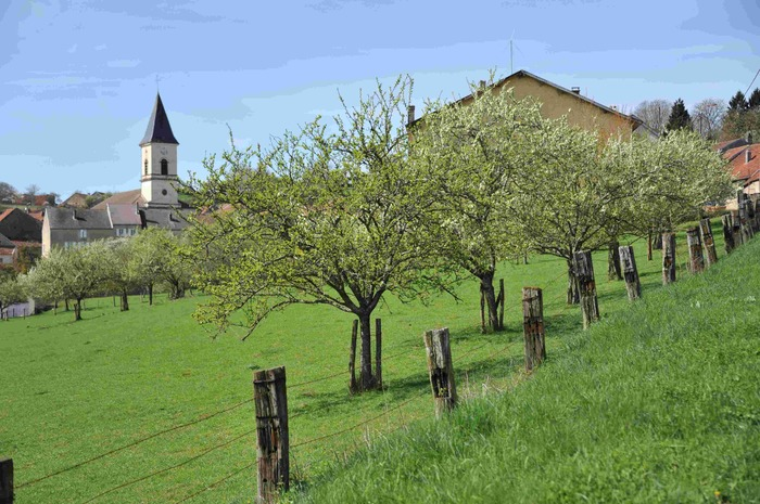 Crédits image : Verger de Haute-Marne - (c) D. Persyn