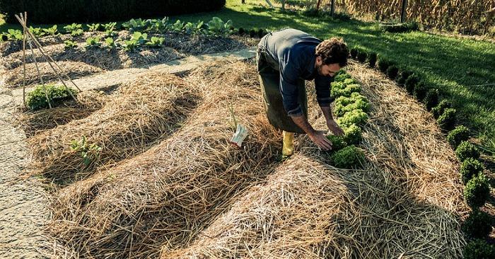 un jardin nest pas seulement un agencement de plantes cest un lieu de vie et dexpression artistique cest aussi un endroit o des corporations - Jardin Permaculture