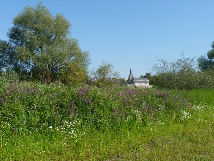Crédits image : Photographie Loiret Nature Environnement