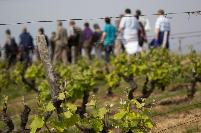 Journées du patrimoine 2018 - De la vigne au verre de vin