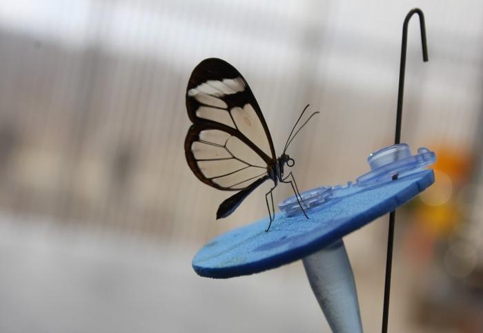 Journées du patrimoine 2018 - Découverte de la Maison des insectes