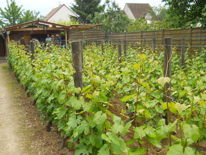 Journées du patrimoine 2018 - Découverte de la vigne du plateau Saint-Martin