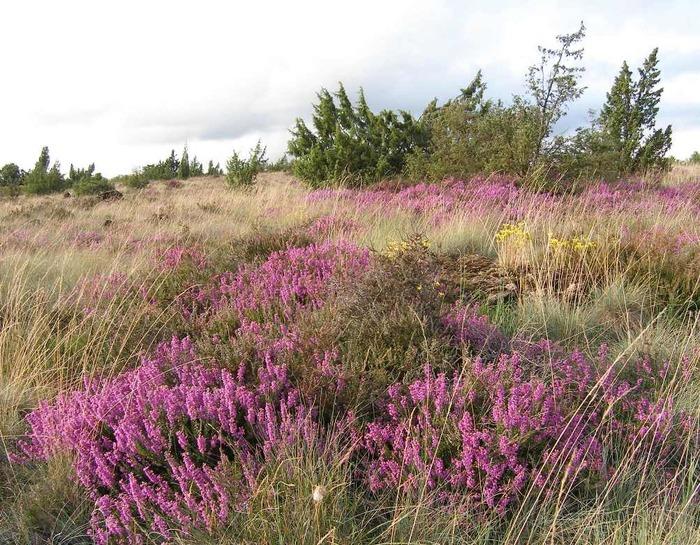 Journées du patrimoine 2018 - Découverte des landes Serpentinicoles du Cluzeau et la Flotte à Meuzac et château-Chervix