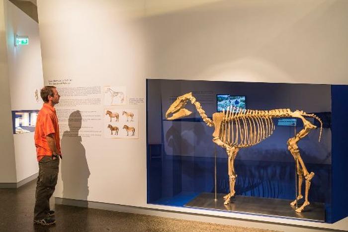 Journées du patrimoine 2018 - Découverte du musée de Préhistoire de Solutré