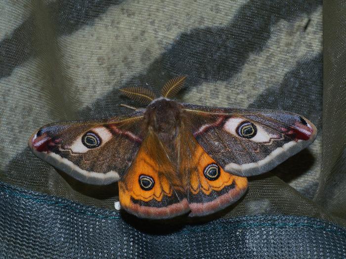 Journées du patrimoine 2018 - Atelier découverte des papillons de nuit.