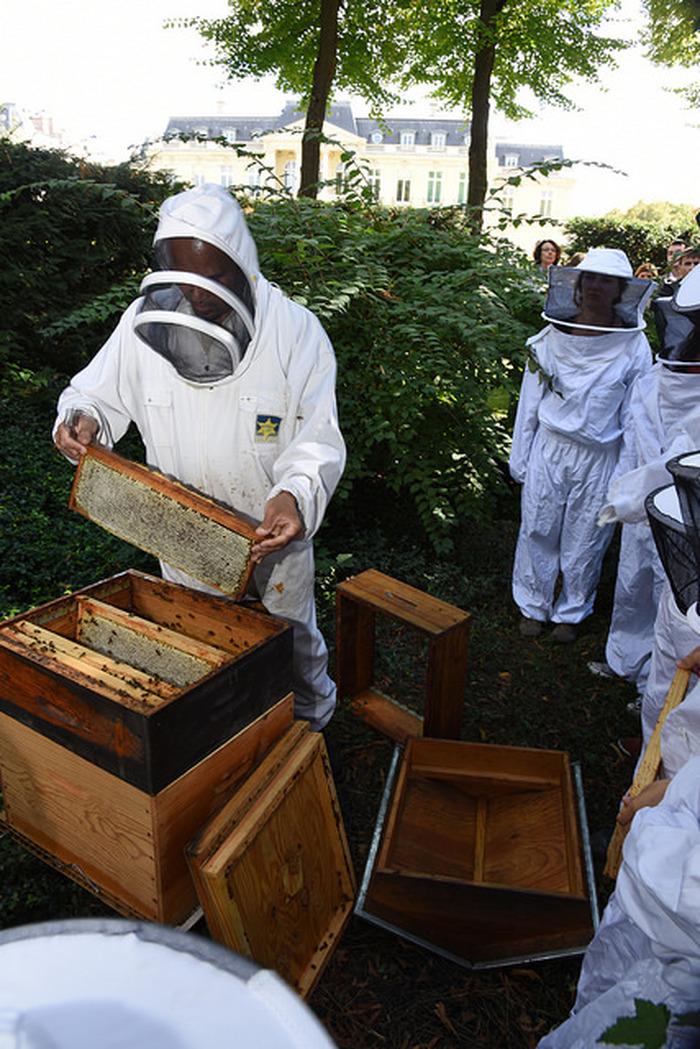 Journées du patrimoine 2018 - Découvrir l'apiculture urbaine. Atelier-rencontre avec l'apiculteur du Château de la Muette