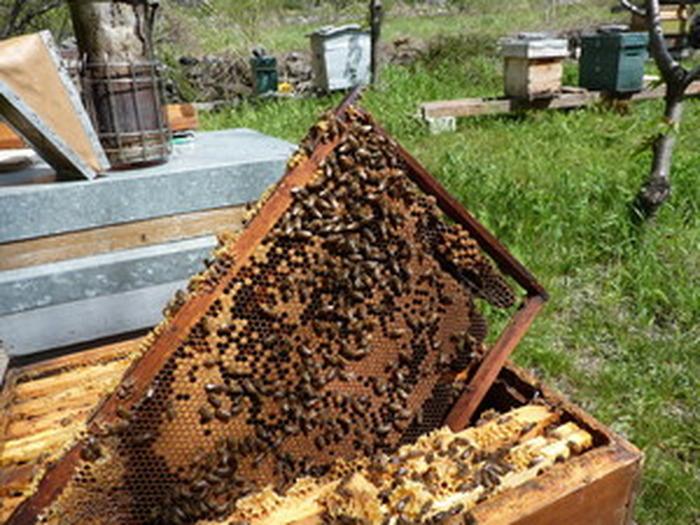 Journées du patrimoine 2018 - Dégustation de miel et animation autour des abeilles