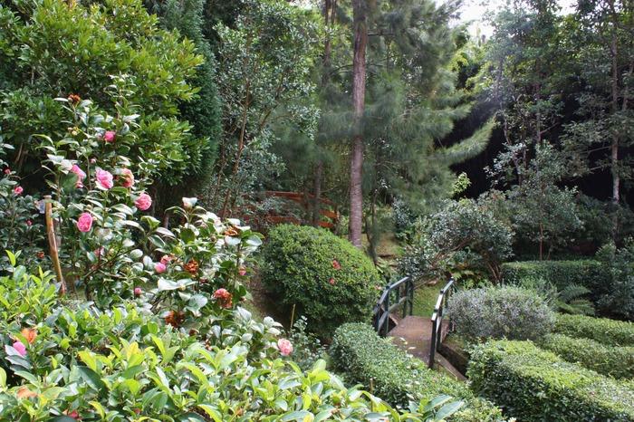 Crédits image : Association Jardins Créoles