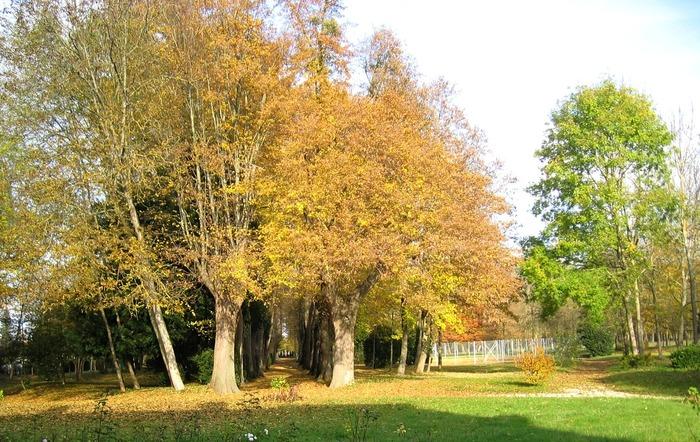 Journées du patrimoine 2018 - Domaine de la Burie : l'allée tricentenaire de tilleuls et marronniers
