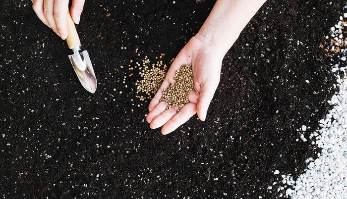 Echanges et plantations de graines