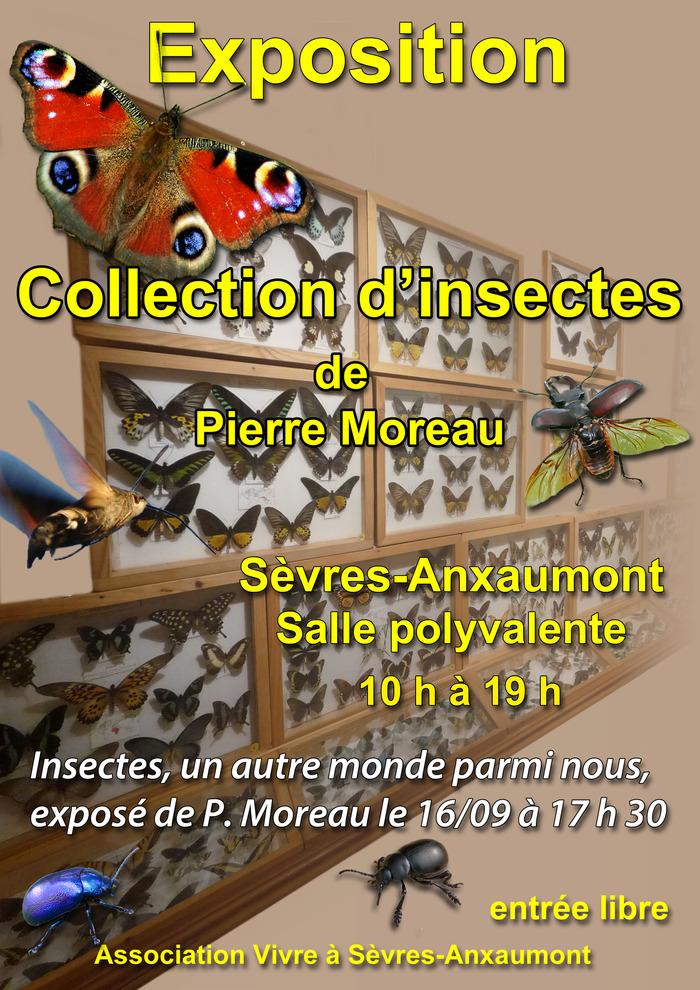 Journées du patrimoine 2017 - Exposition collection d'insectes