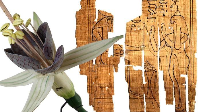 Journées du patrimoine 2017 - Visite libre de l'exposition de papyrus et de modèles Auzoux à l'ESPE