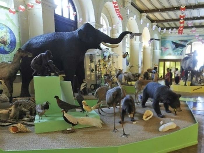 Journées du patrimoine 2017 - Exposition Mark Dion