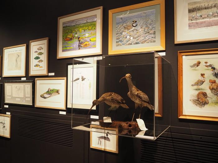Journées du patrimoine 2018 - Exposition: «Regards sur le dessin naturaliste»