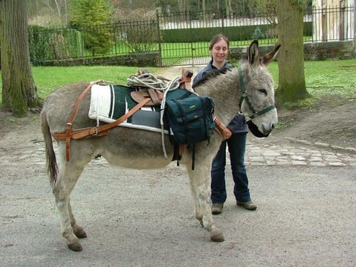 Journées du patrimoine 2018 - Fête des serrures - Balades à dos d'ânes dans le parc de La Chevrette