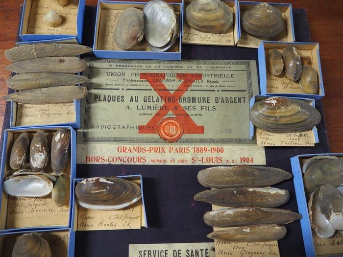 Journées du patrimoine 2018 - Focus 130 ans d'objets à étudier, conserver, inventorier : la part de l'homme