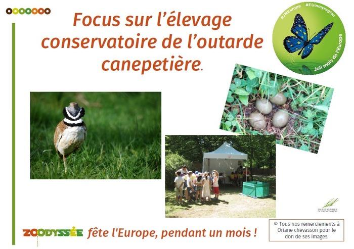 Focus sur l'élevage conservatoire de l'outarde canepetière