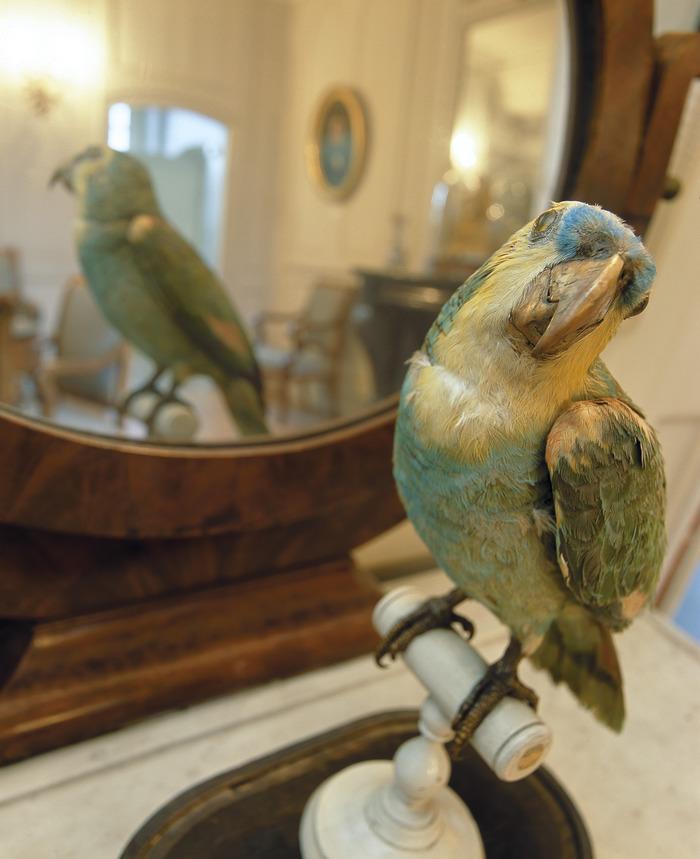 Journées du patrimoine 2018 - Visite guidée du musée Flaubert et d'histoire de la médecine