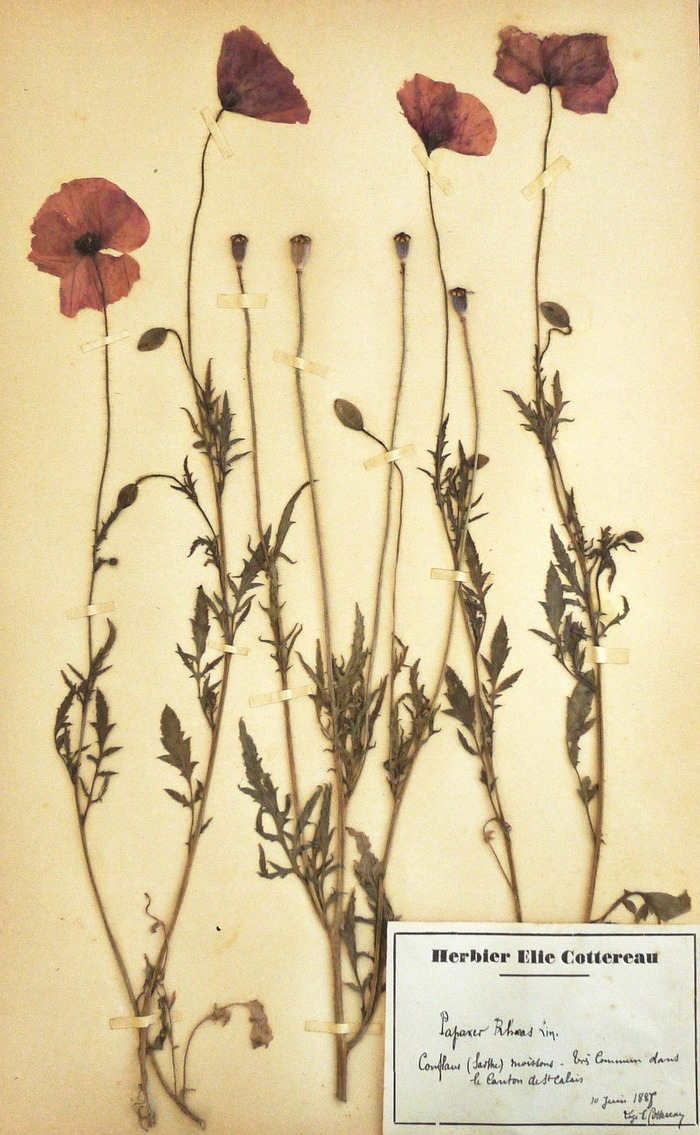 Journées du patrimoine 2017 - Herbiers, l'aventure botanique