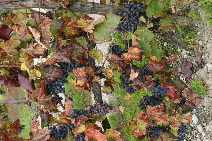 Journées du patrimoine 2017 - Histoire de la vigne et du vin en Grésivaudan