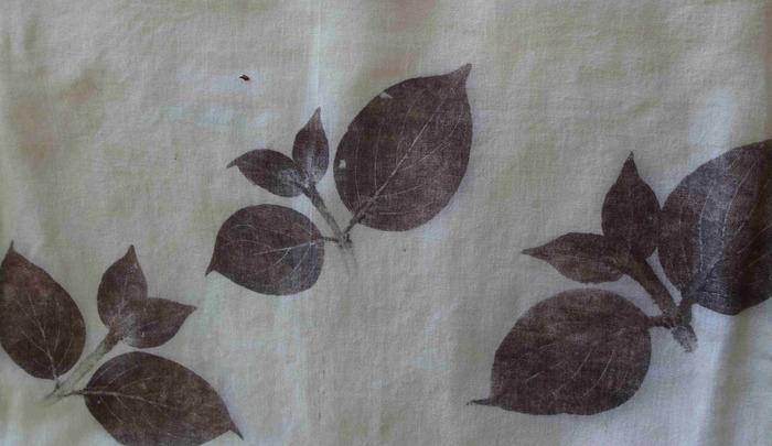 Impressions et encres avec les plantes à tanins