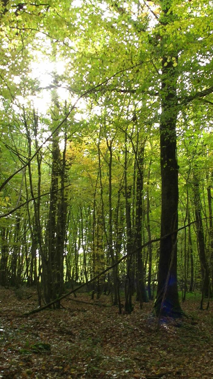 Journées du patrimoine 2018 - Circuit au coeur de l'espace naturel sensible de la Sanne.