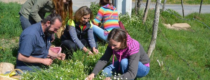 Journées du patrimoine 2018 - Initiations aux usages, et vertus des plantes sauvages au lac des Sapins