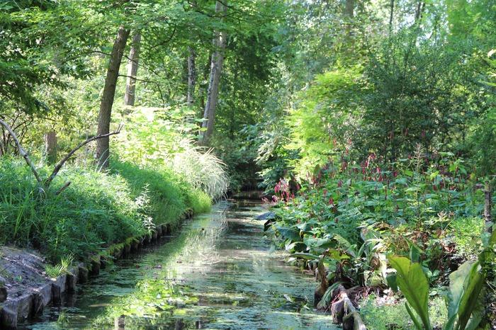 Crédits image : jardin arboretum d'ilex