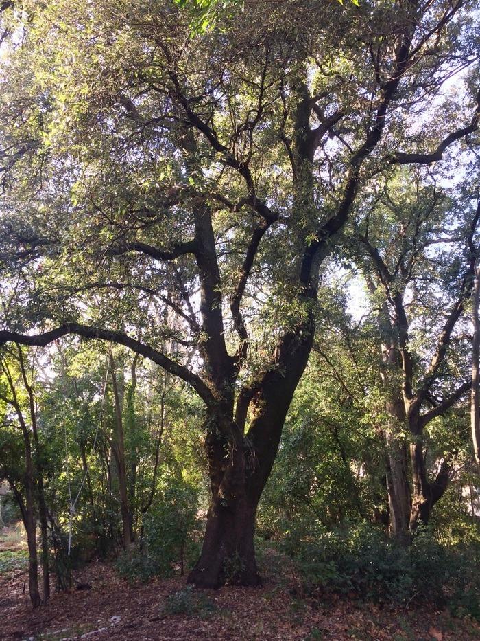 Journées du patrimoine 2018 - Visite guidée et exposition sur l'histoire du Jardin