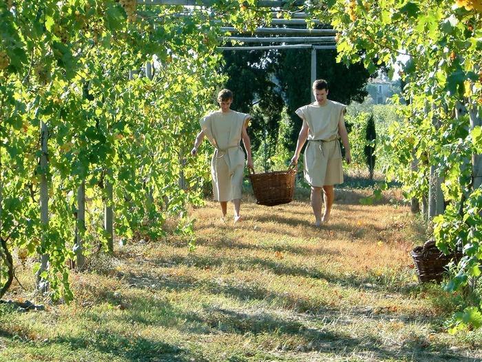 Journées du patrimoine 2018 - Circuit : Jardin et vignoble romains reconstitués