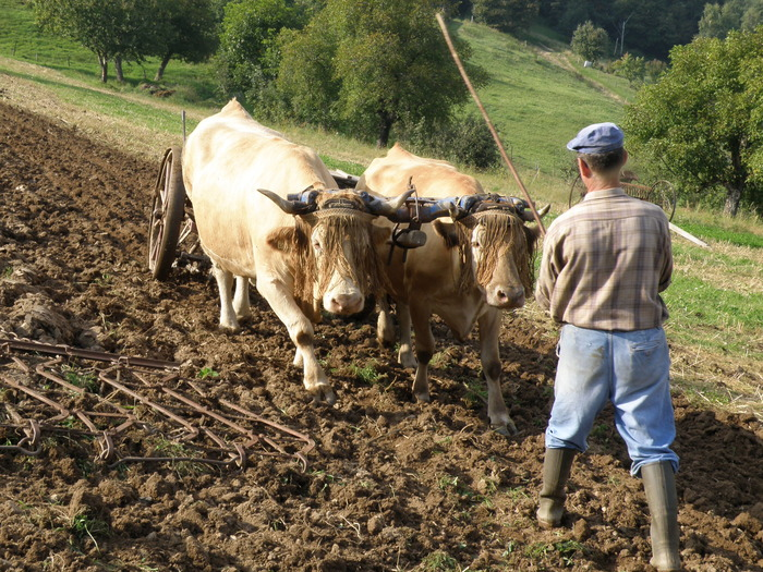 Journées du patrimoine 2017 - Journées du patrimoine à la ferme à l'ancienne