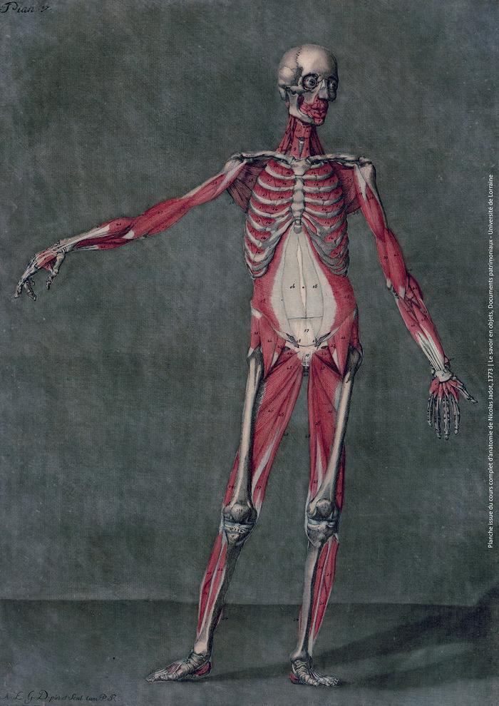 Journées du patrimoine 2018 - L'anatomie humaine au détour d'ouvrages anciens